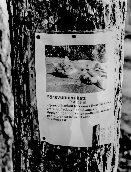 Cat lost !