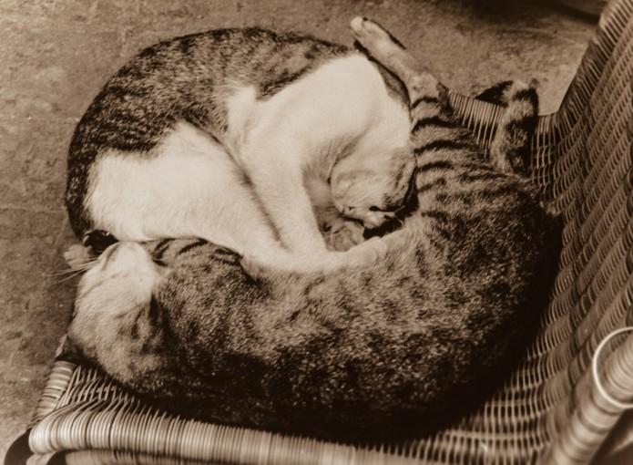 Cat and kitten